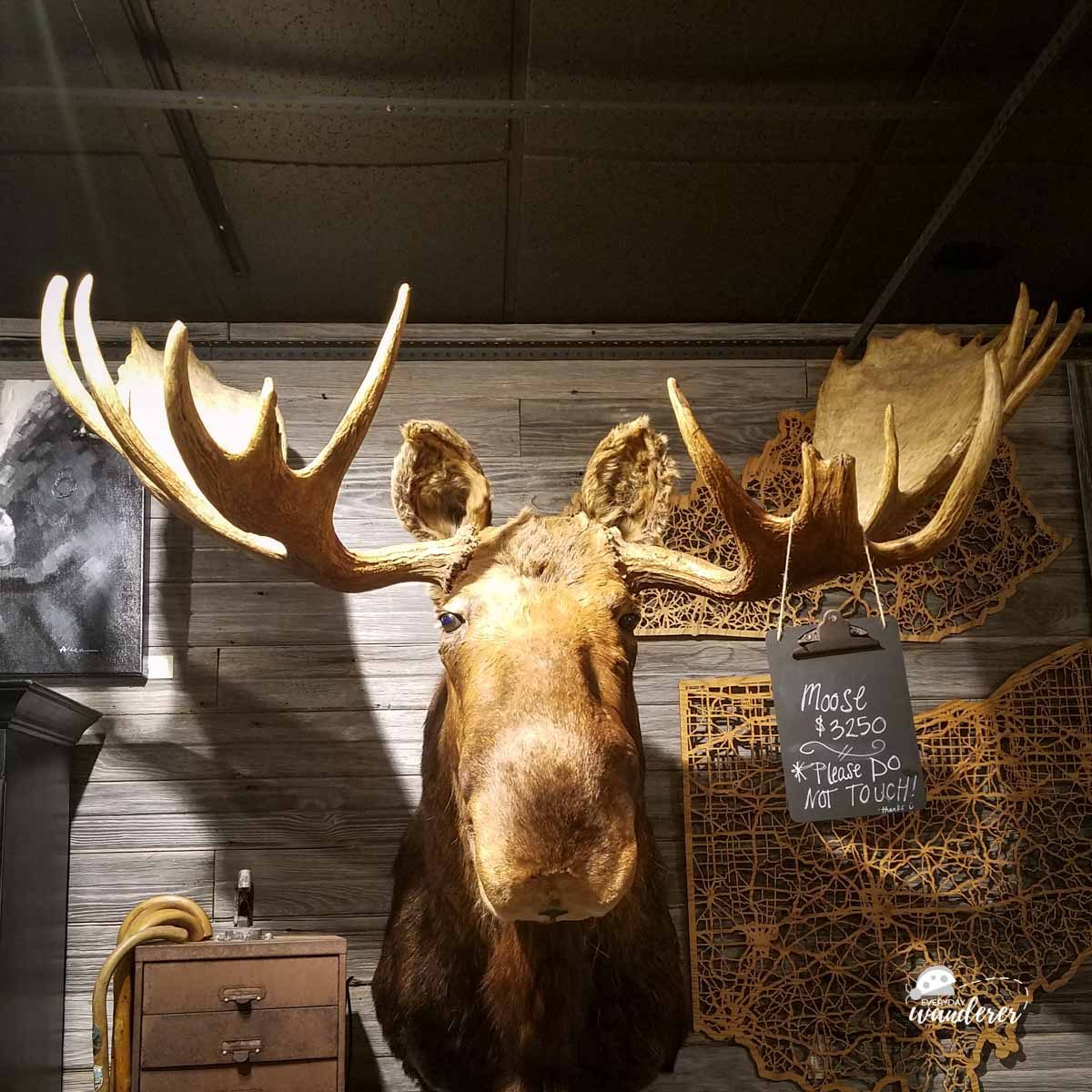 Moose in Over-the-Rhine Boutique