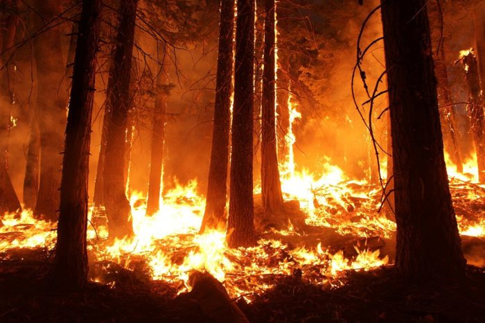 Why Forest Fires (Although Terrifying) Are Actually Good for the Environment
