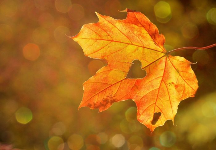 Travel Tips & Themes - Autumn Travel Tips and Fall Travel Tips