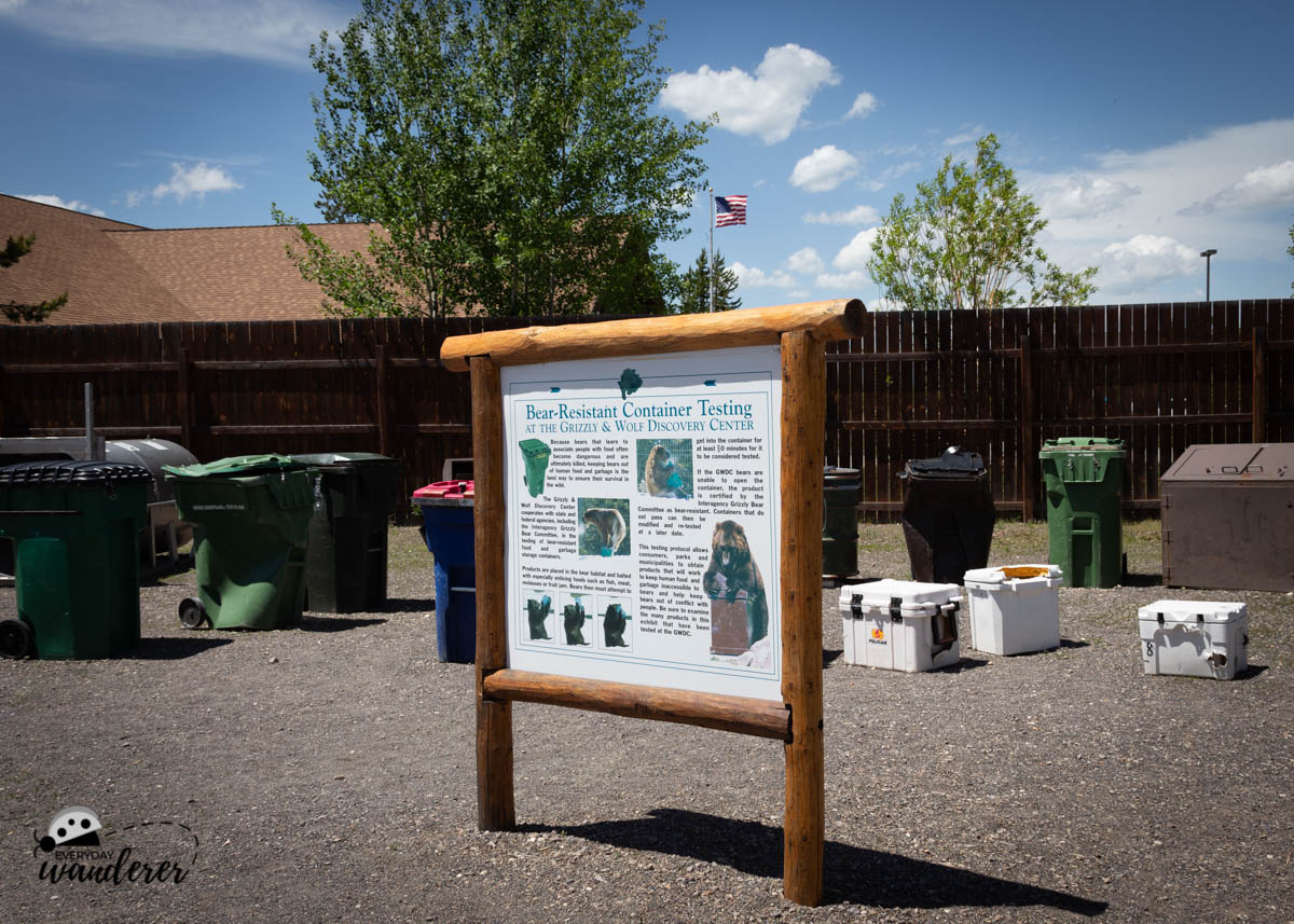 The bears at the Grizzly and Wolf Discovery Center help product test trash cans, food coolers, and other containers.
