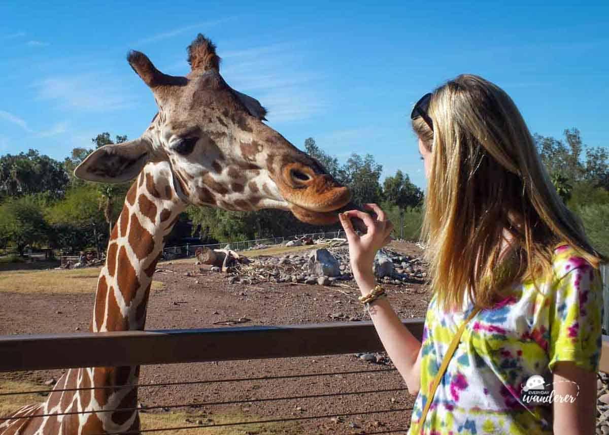 Juliette Feeds a Giraffe at the Phoenix Zoo