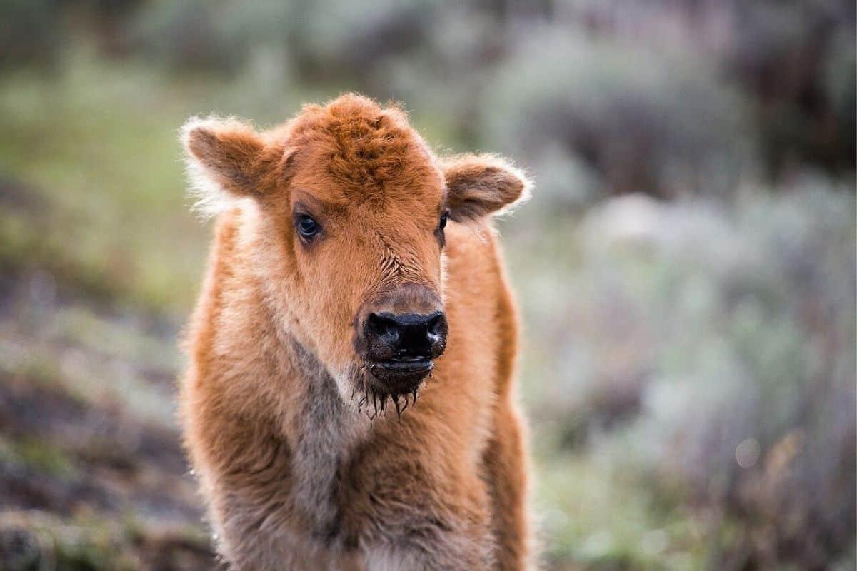 Travel Tips & Themes: Animal Encounters