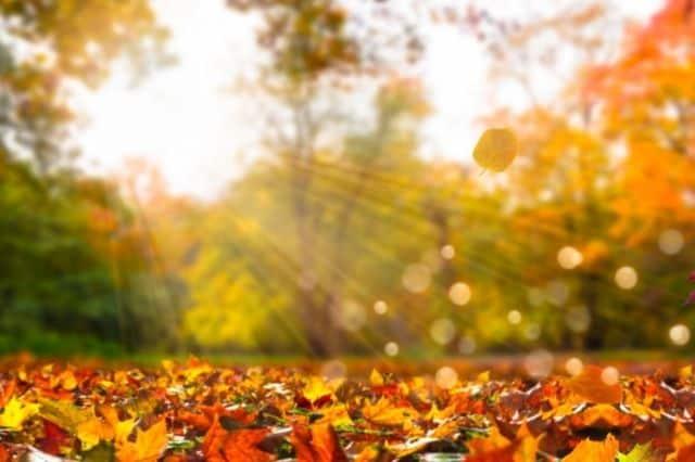 Seasonal Travel - Fall