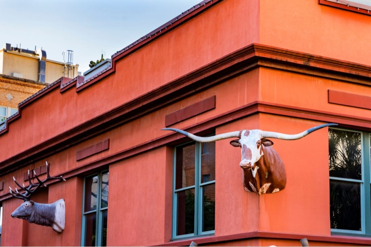 The head of a longhorn steer affixed to the corner of the Buckhorn Saloon in San Antonio
