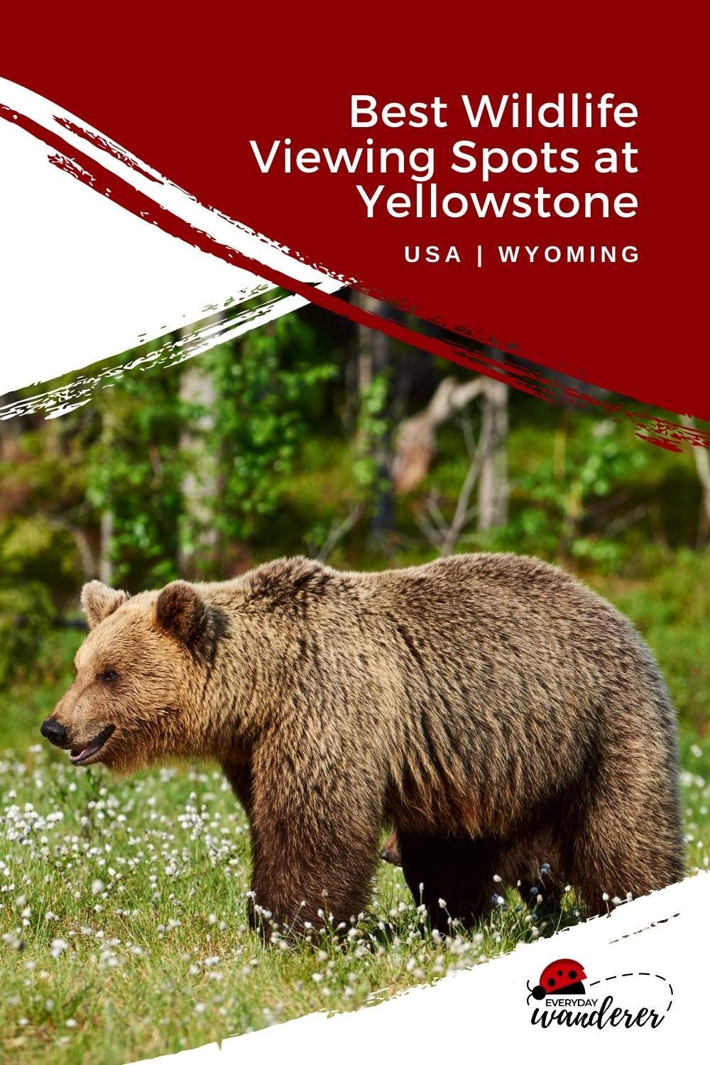 Animals at Yellowstone - Pin 1 - JPG