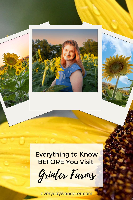 Grinter Farms Sunflower Fields - Pin 5 - PNG
