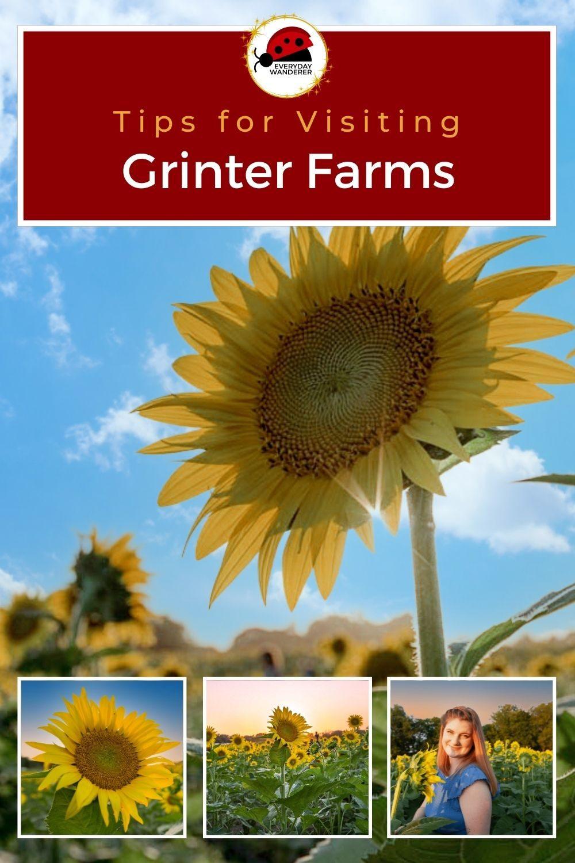 Grinter Farms Sunflower Fields - Pin 6 - JPG