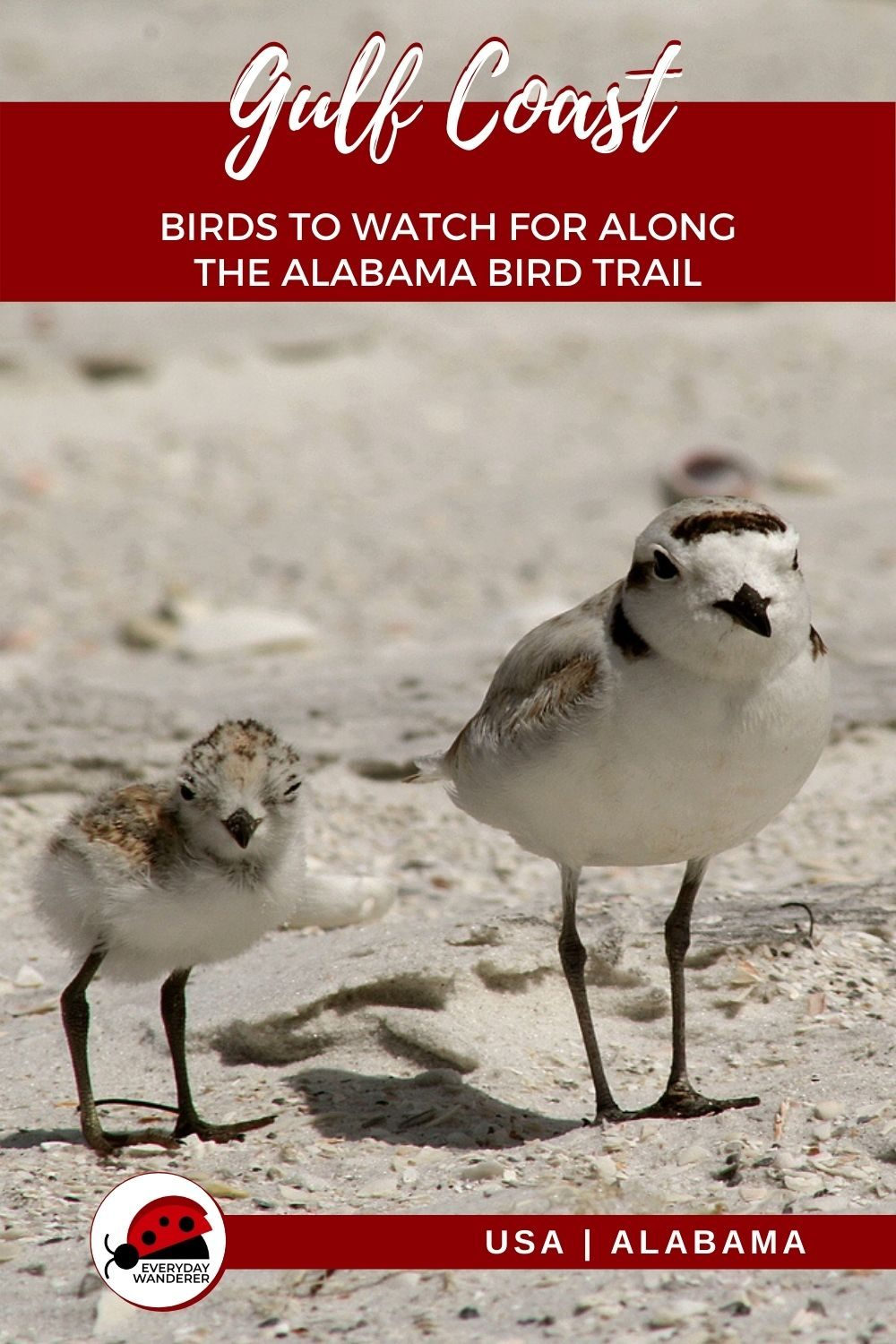 Gulf Coast Birds - Pin 6 - JPG